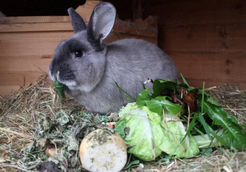 Чем кормить кормящую крольчиху после окрола | petnaobed.ru | яндекс дзен