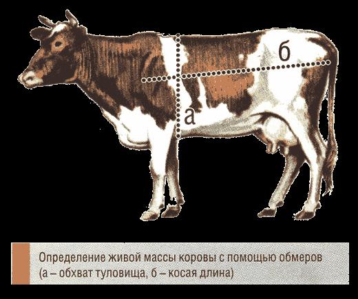 Таблица измерения веса крс | таблица живая масса крупного рогатого скота по промерам