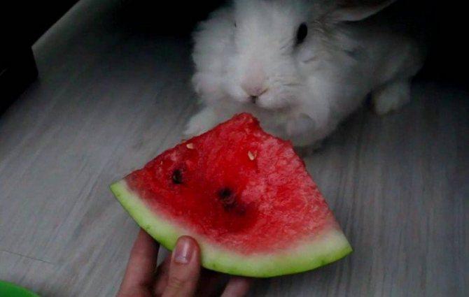 Можно ли кроликам давать арбуз и дыню, вред и польза