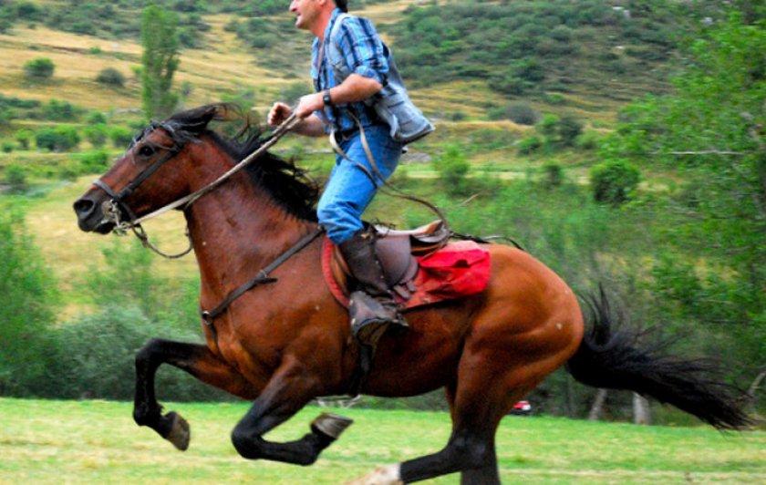 Какие лошади выигрывали чаще других?