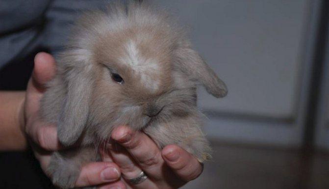 Как приручить кролика - налаживаем контакт с ушастым питомцем