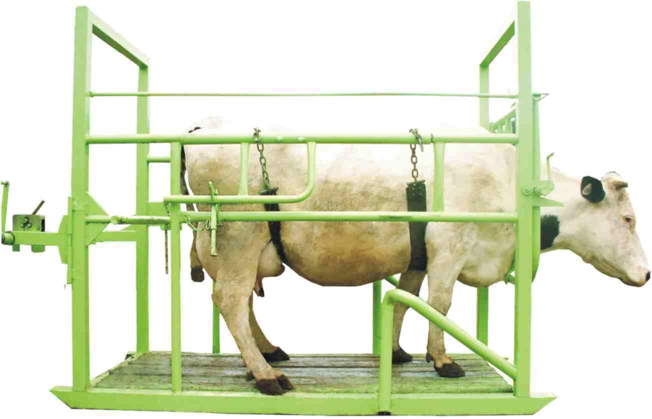 Коровник своими руками - пошаговая инструкция и советы