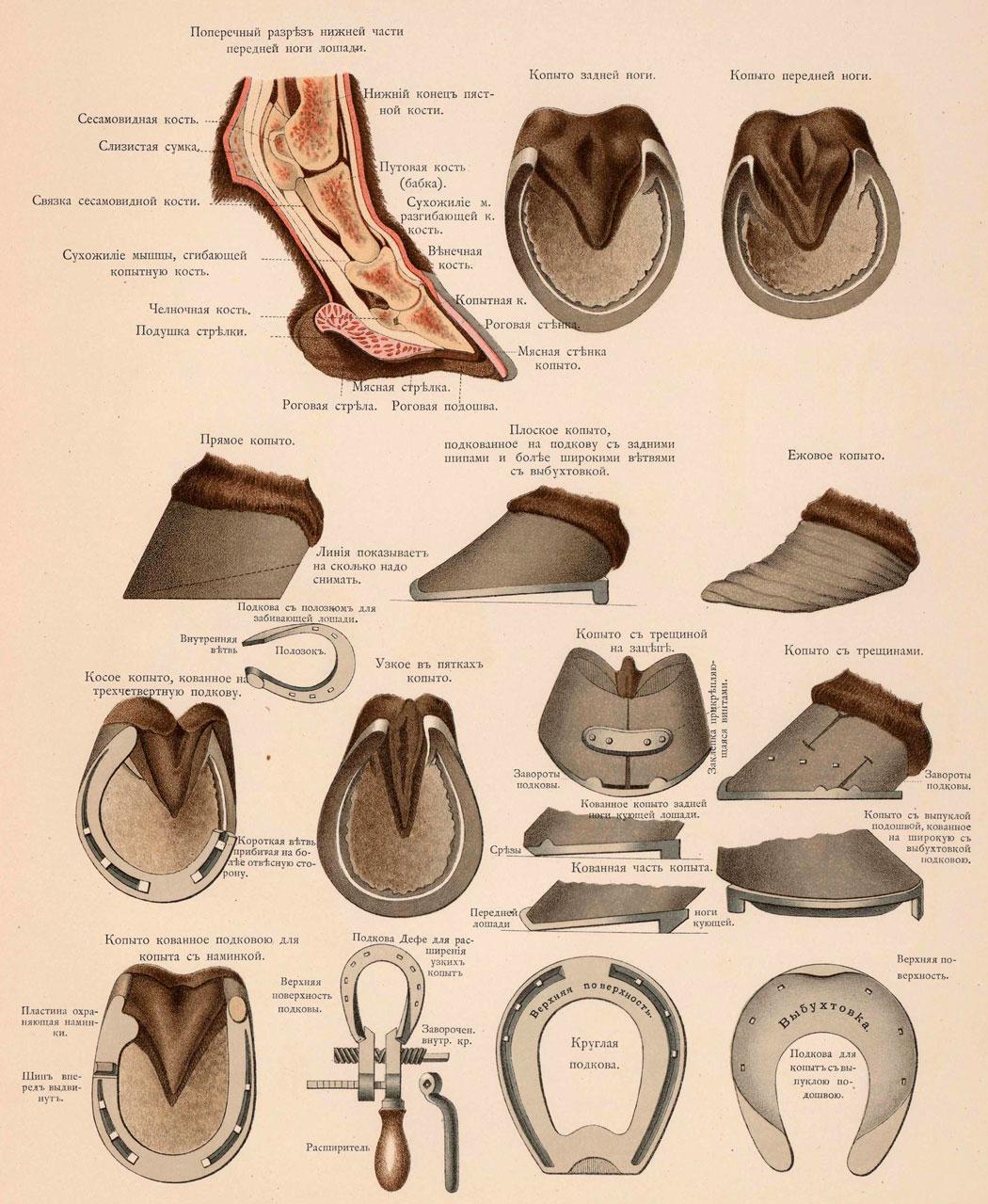 Части тела лошади названия   блог анатолия кузнецова