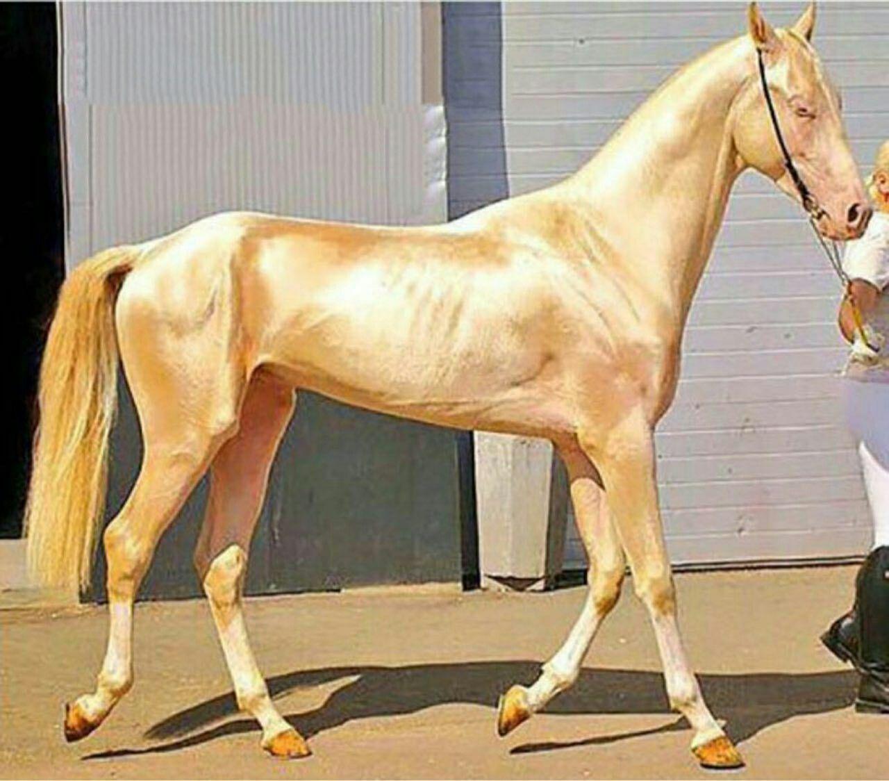 Самая дорогая лошадь в мире: сколько стоит самая дорогая лошадь в мире - топ
