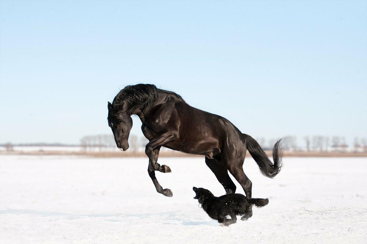 Лошадь кусается лягается