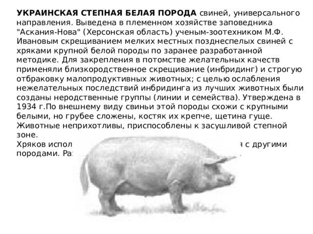 Черная свинья – описание породы, особенности кормления и содержания 2020
