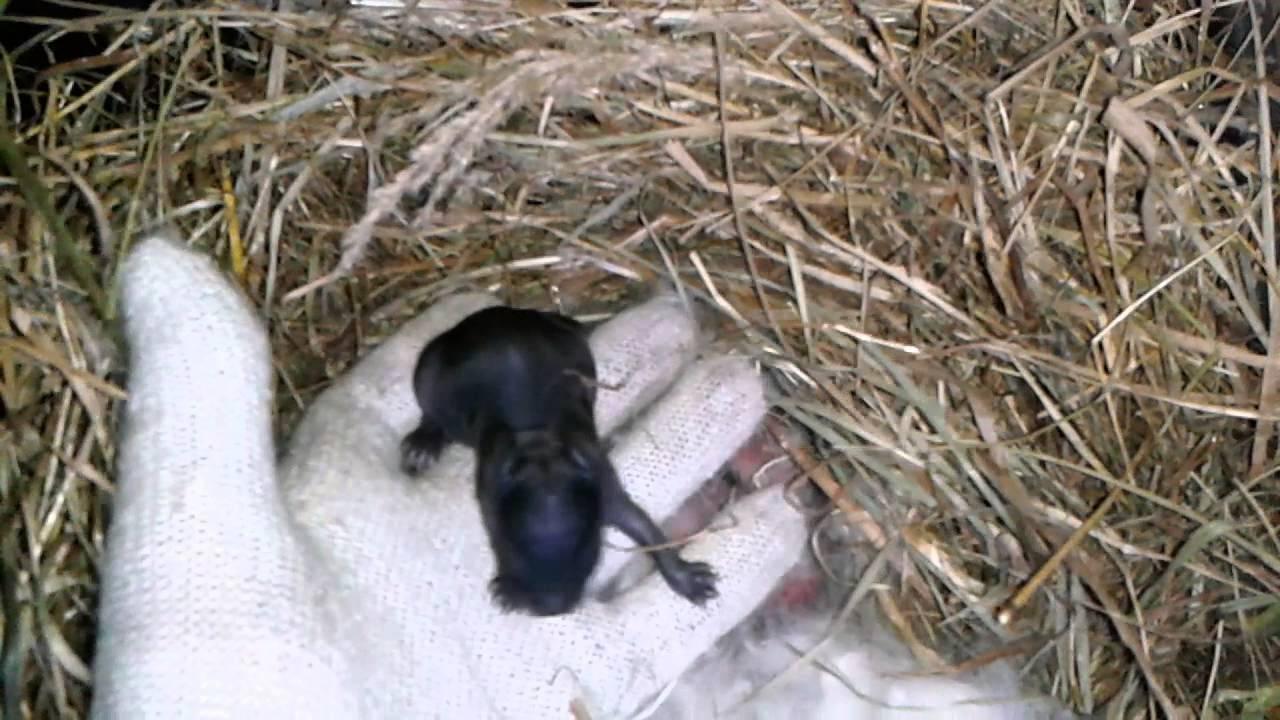 Чем кормить маленького крольчонка: кормление при крольчихе и после отсадки