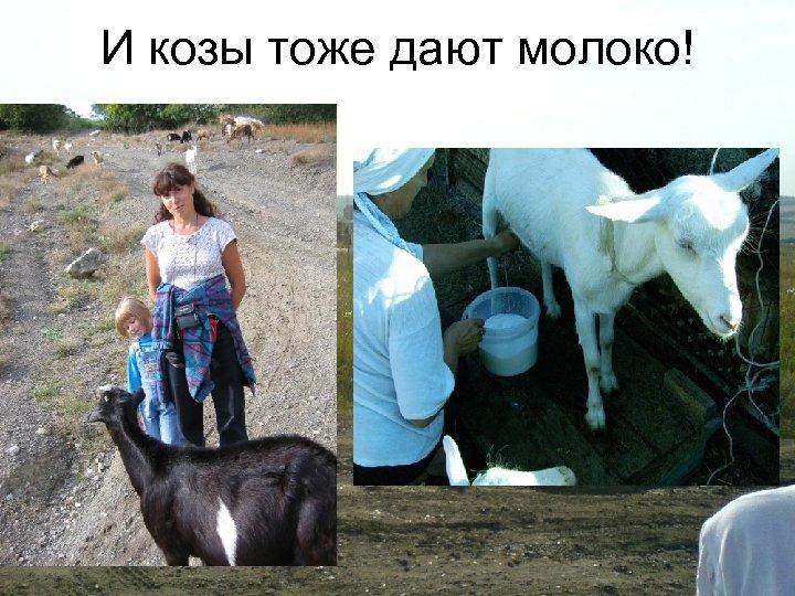Удой козы в сутки