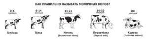 Коза-молочница или сколько она дает молока?