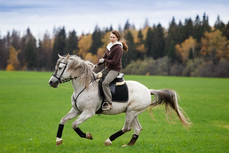 ✅ самые быстрые лошади в мире: средняя скорость бега коня с наездником - tehnomir32.ru