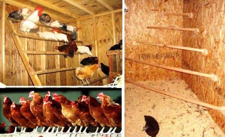 Гнездо для несушек своими руками: как правильно построить или сделать гнездо для кур с яйцесборником и чертежи с размерами для этого