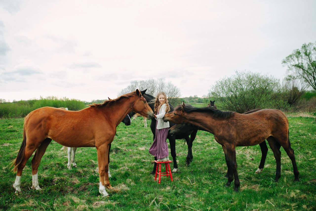 ✅ как обучать лошадь: как научить коня выполнять команды в домашних условиях - tehnomir32.ru