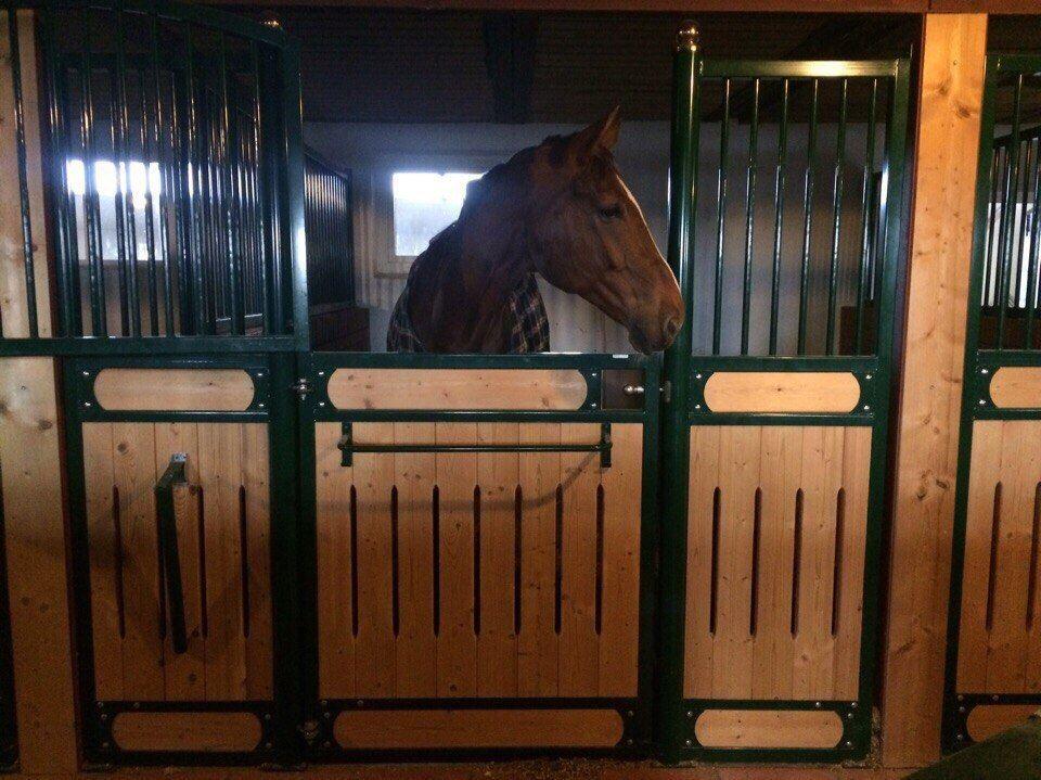 Как построить конюшню для лошадей на своем участке