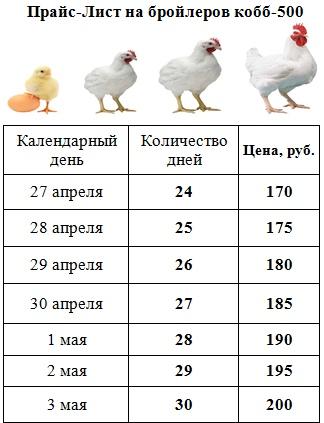 Порода бройлеров ross 308: описание и выращивание