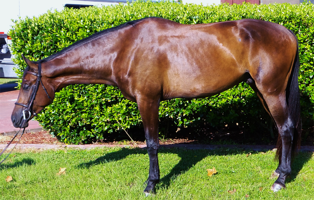 Буланый конь: особенности и виды