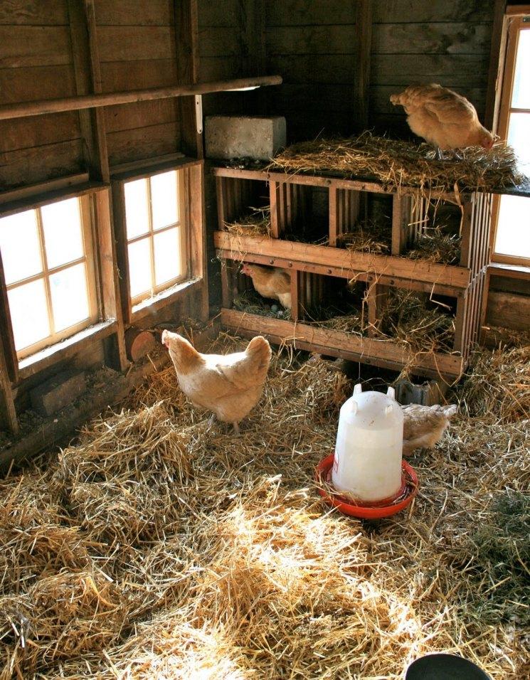 О курятниках для кур своими руками как сделать домик сарай для курицы