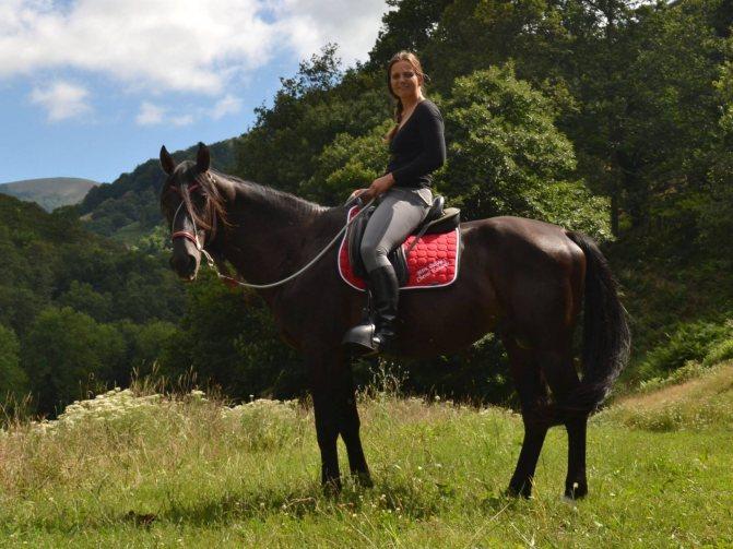 Кабардинская порода лошадей: историческая справка и характеристика породы, экстерьер и характер, уход