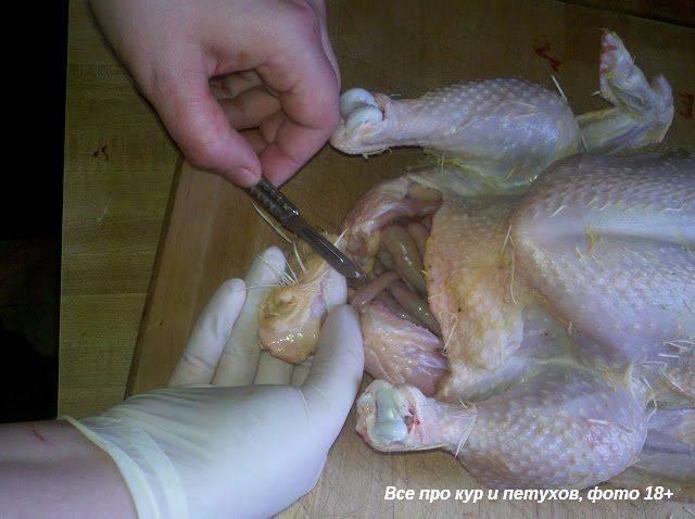Как зарезать курицу — способы забоя и методы обработки