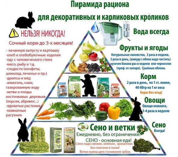 Чем кормить декоративного кролика? составление рациона в домашних условиях. сколько раз в день едят кролики? какой корм выбрать? можно ли давать кроликам грушу?