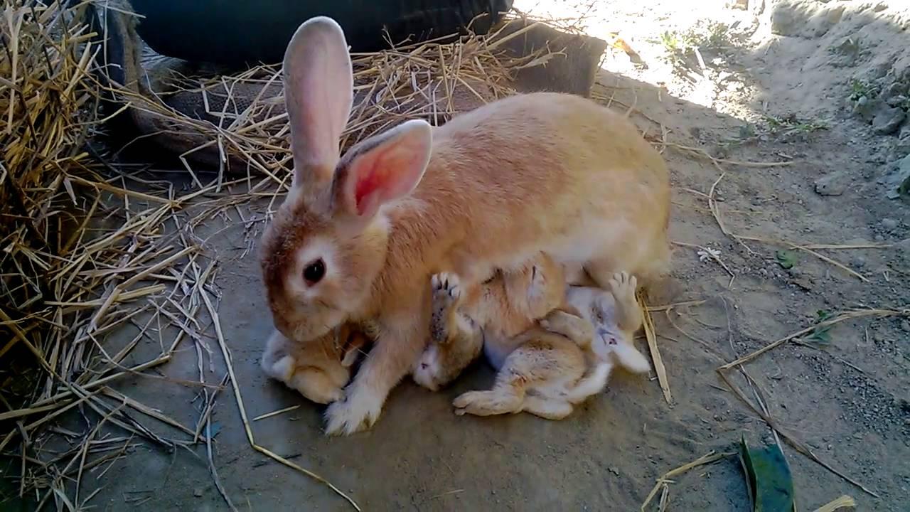 Крольчиха съела крольчат что делать