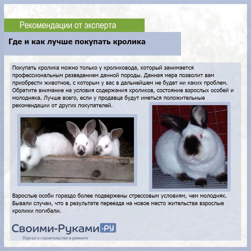 Порода кроликов бабочек: описание и характеристика, разведение и содержание