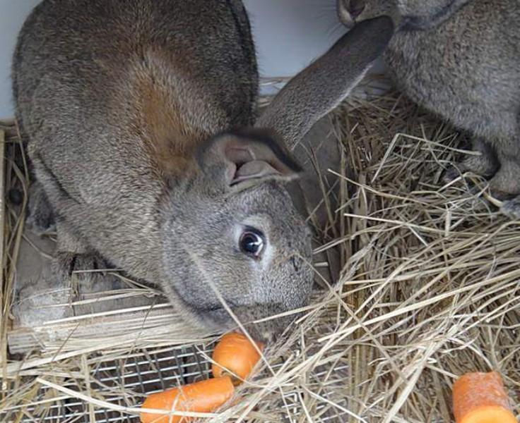 Чем можно и нельзя кормить декоративного кролика в домашних условиях