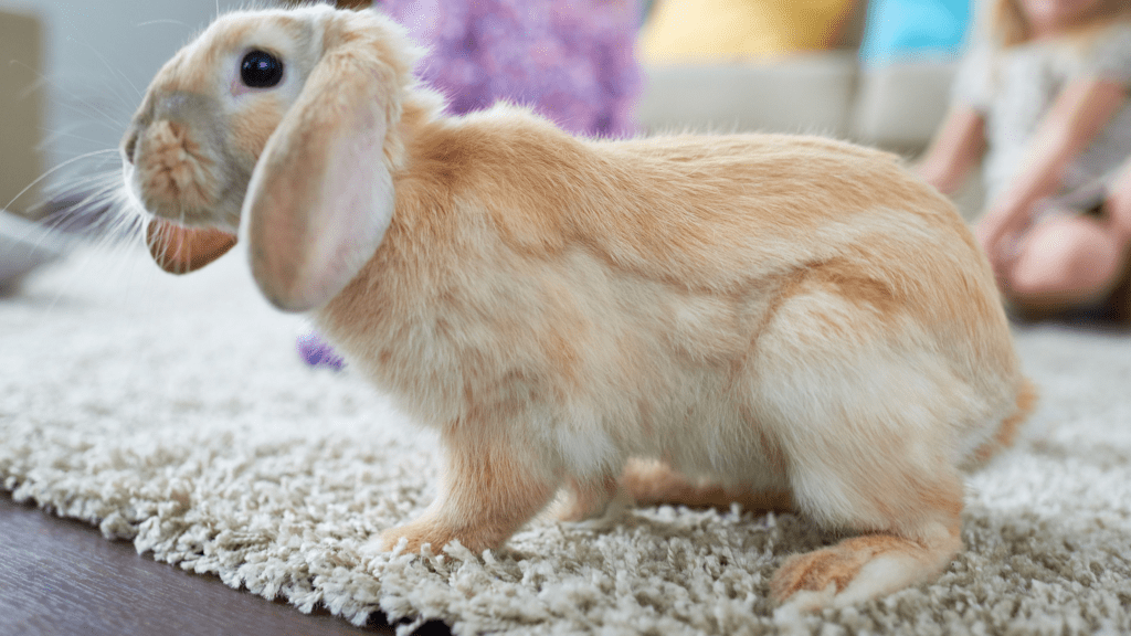 Язык кроликов - звуки, топот, развлечения и общение | littlerabbit.ru