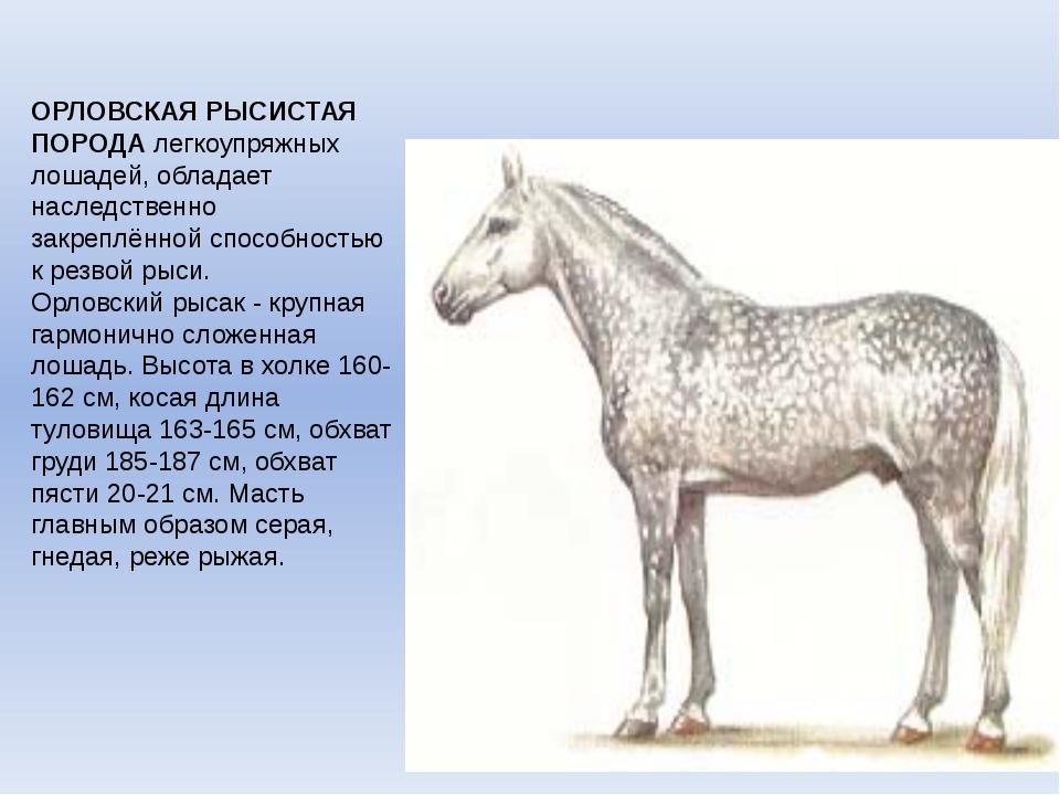 Орловский рысак. - гордость российского коневодства