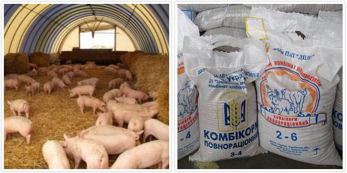 О стимуляторах роста для свиней