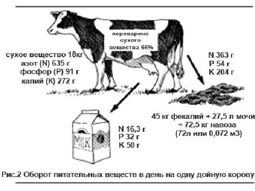 Откормить бычка до 700 кг