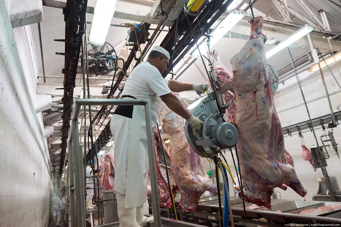 Части тела коровы: как разделать быка, схема туши