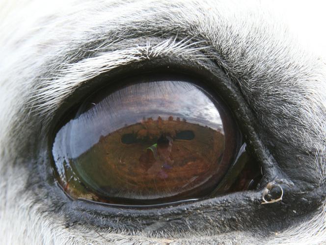 Зрение лошади - твойпитомец