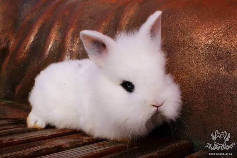 ᐉ как правильно организовать уход за декоративными кроликами в домашних условиях? - zooon.ru
