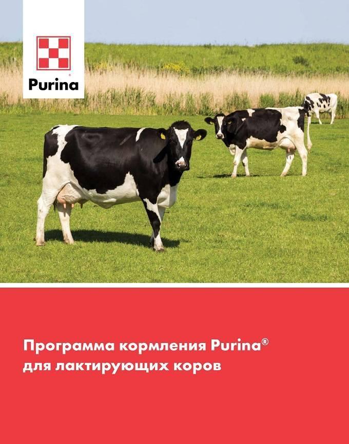 О крупном рогатом скоте (биологические и хозяйственные особенности крс)