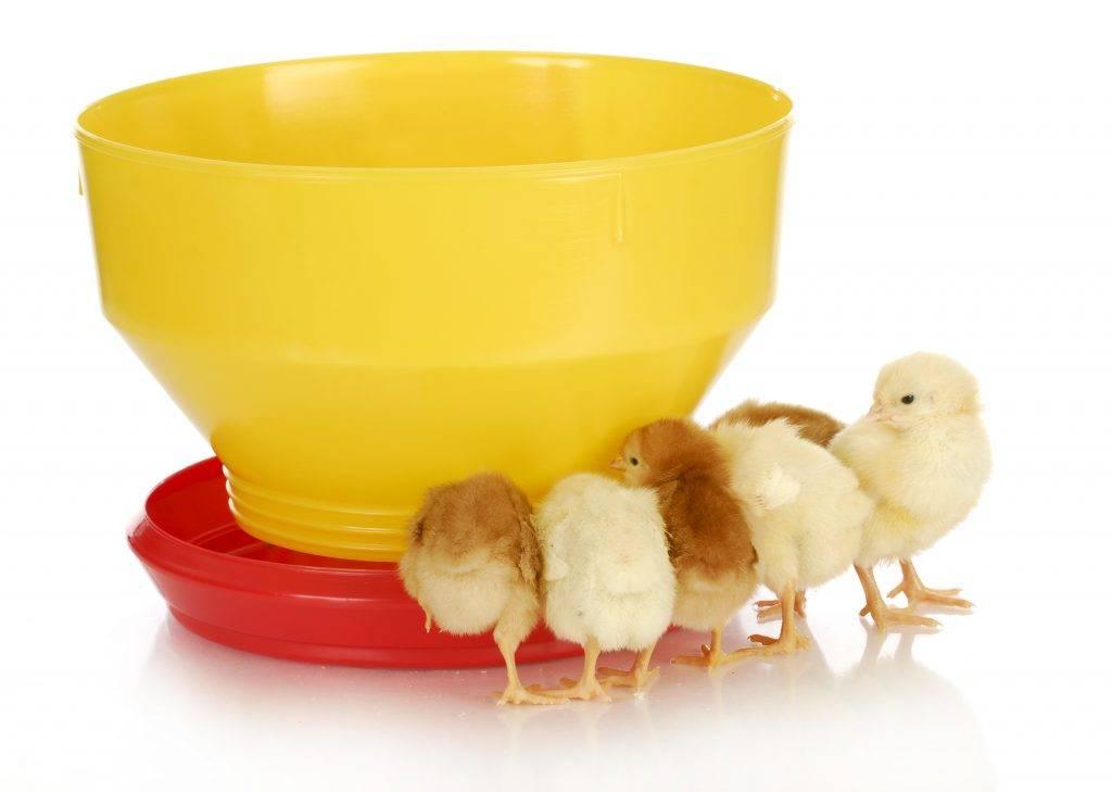 Применение в ветеринарии чиктоника: инструкция по применению для птиц и животных