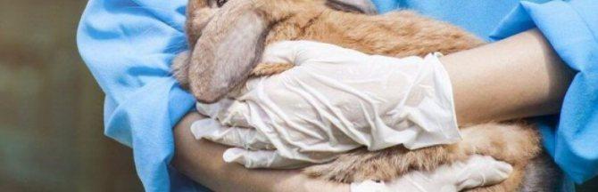 Признаки и симптомы стоматита у кроликов: как бороться с недугом?
