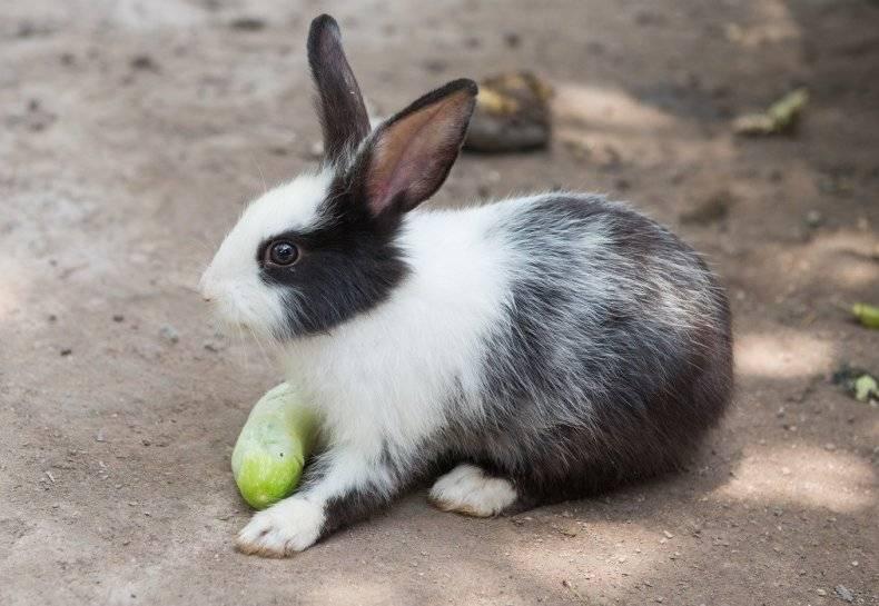 Можно ли кроликам давать ботву моркови и ее корнеплоды