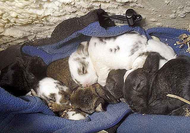 Болезни кроликов и как их лечить в домашних условиях
