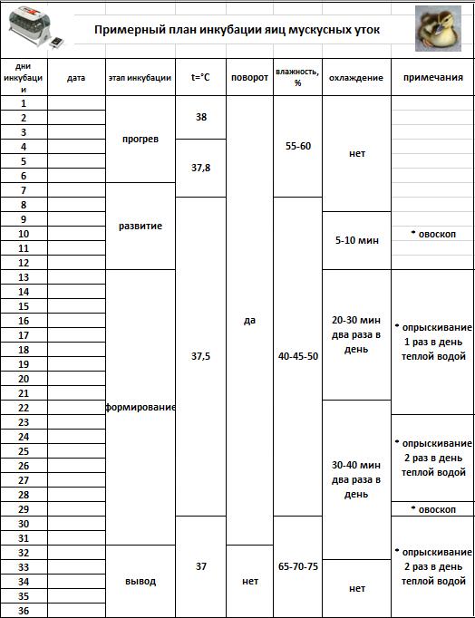 Инкубация утиных яиц в домашних условиях: режим, таблица, температура