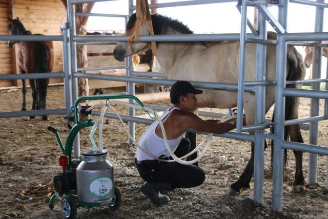 Кобылье молоко: вред и польза для мужчин и женщин, калорийность и химический состав