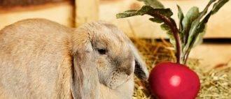 ✅ можно ли кормить кроликов арбузными корками - питомник46.рф