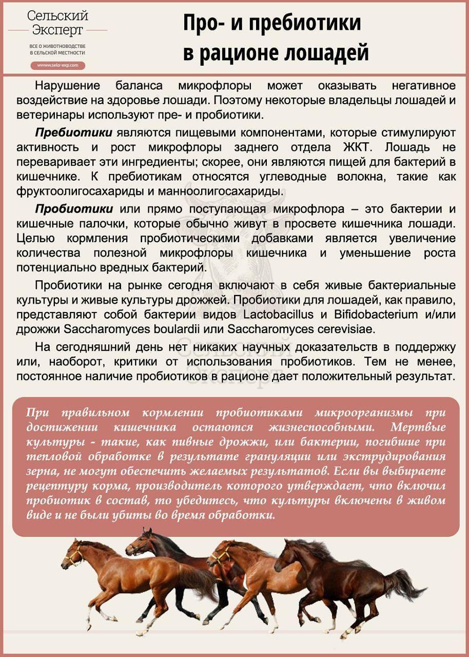 Дестриэ — описание и фото породы лошади | мои лошадки
