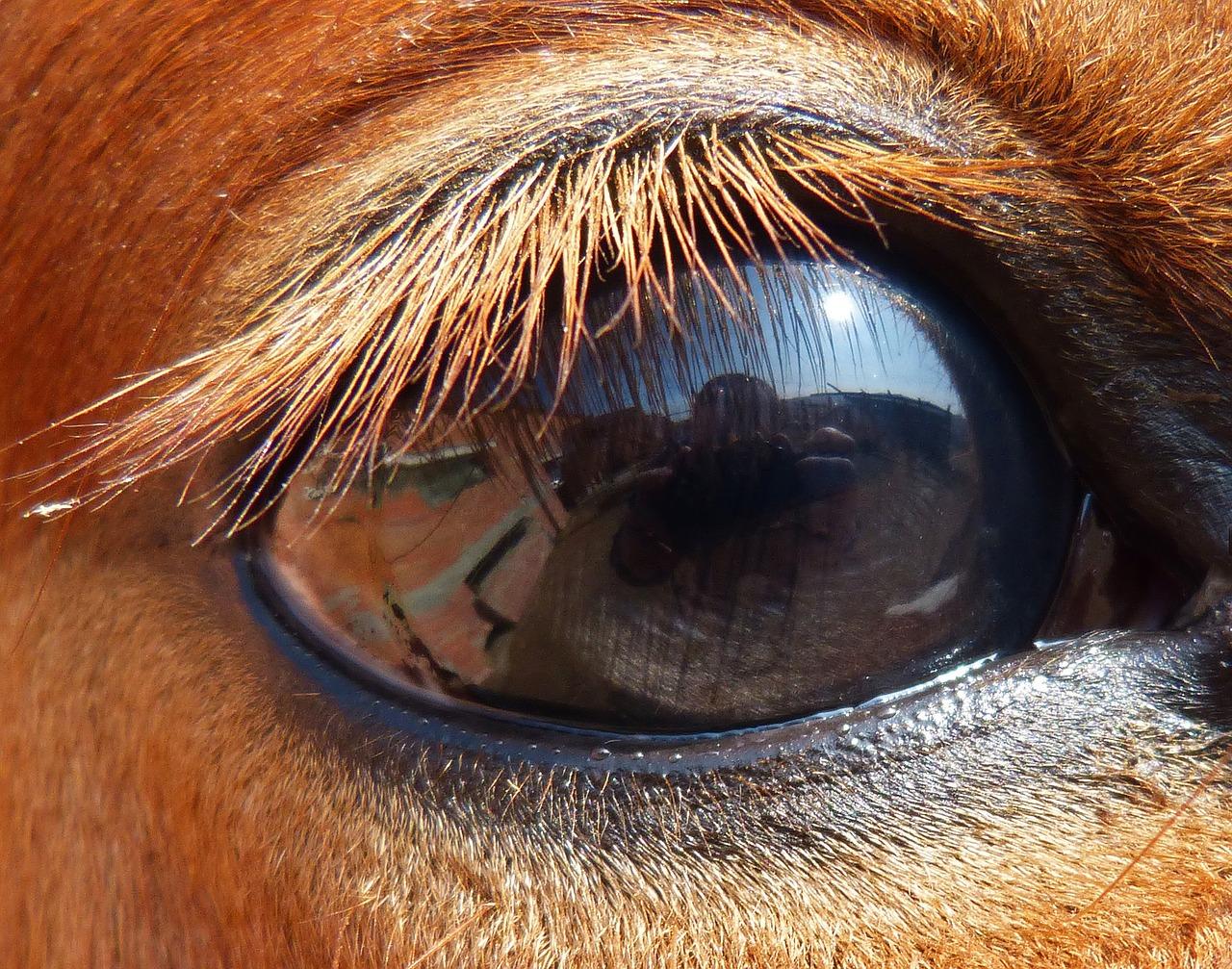 Глаза лошади, зачем их закрывают