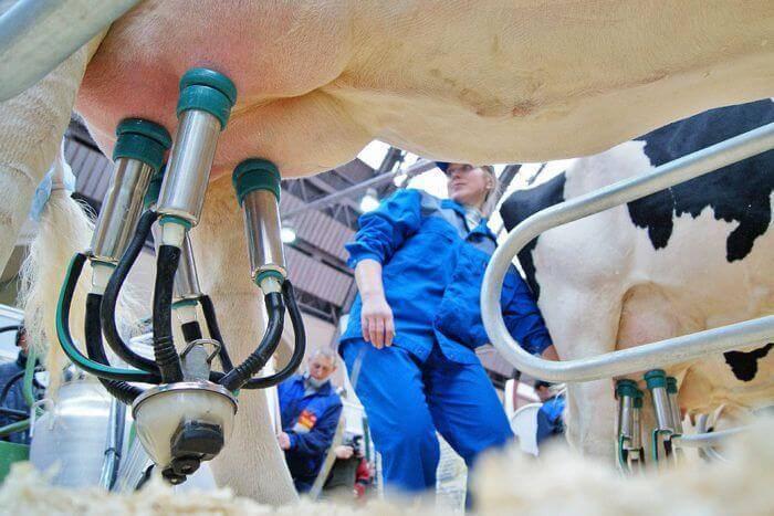 ✅ о доильном аппарате (технология доения коров в домашних условиях)
