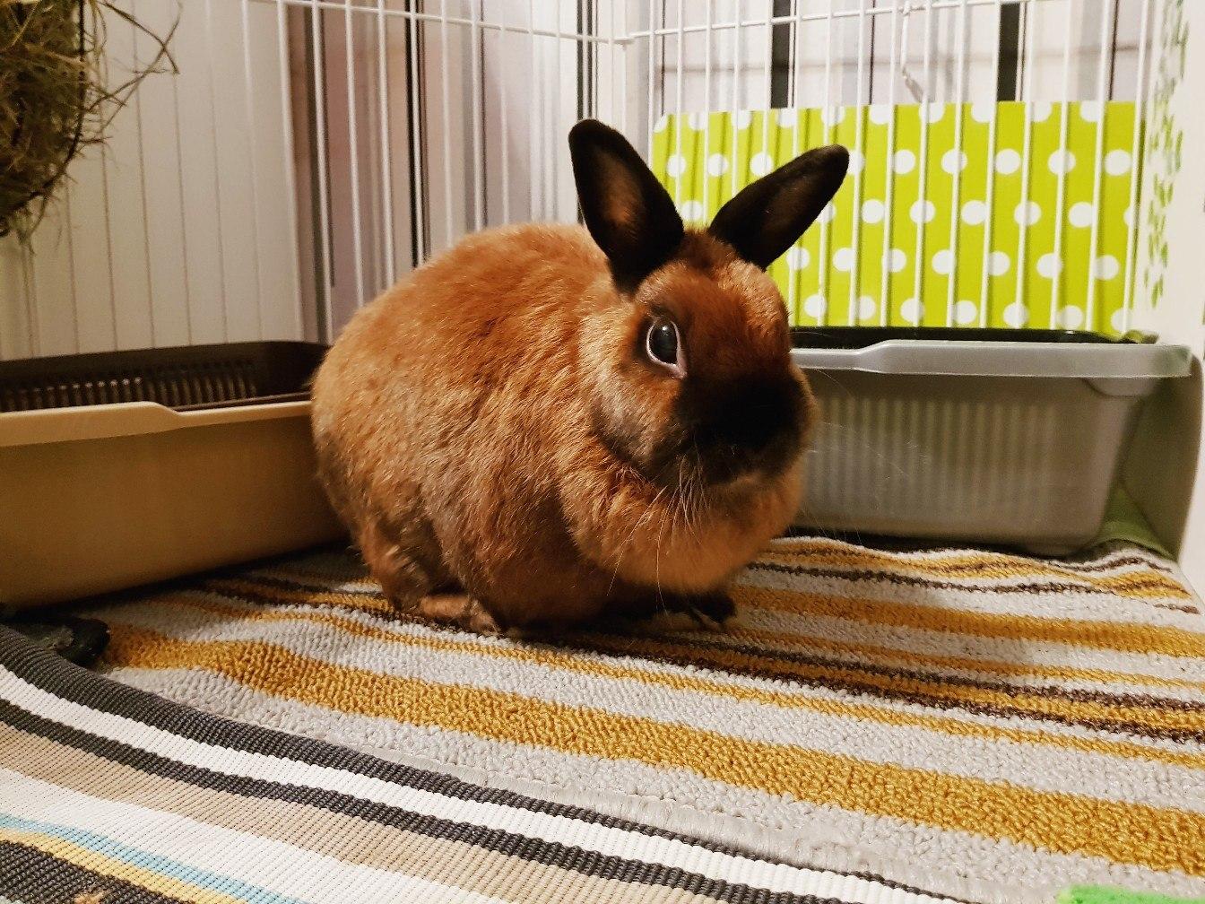 Декоративные кролики уход и содержание в домашних условиях