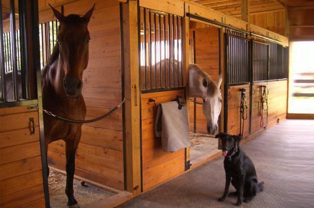 Как ухаживать за лошадью — основные правила