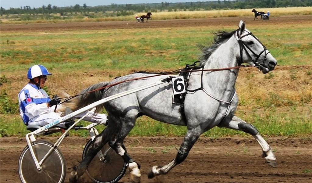 Чем отличаются орловские рысаки: история, породные признаки, фото коней ? ринг-выводка лошадей орловской рысистой породы ? животные ? другое