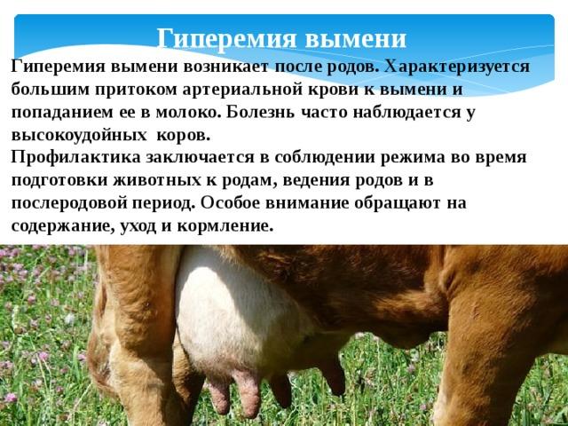 ✅ симптомы и лечение лептоспироза у крупного рогатого скота (пошаговая инструкция) - tehnomir32.ru