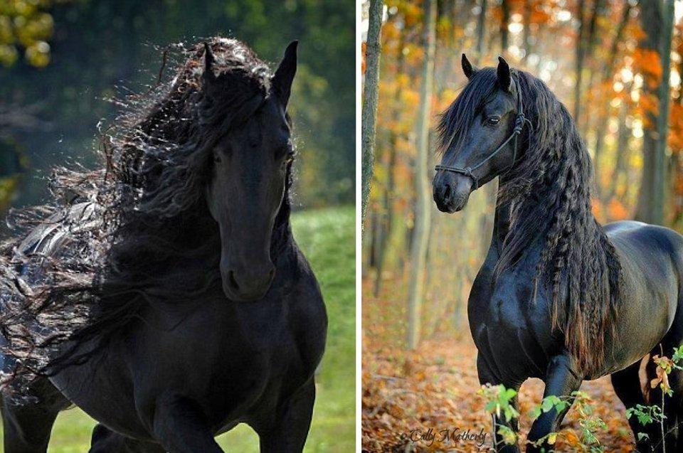 Самые красивые лошади мира: описание и отличительные черты пород