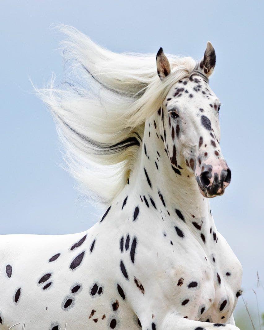 Самые красивые лошади в мире, 30 фото красивых пород